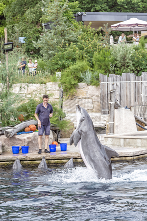 NUREMBERG, GERMANY – JULY 22, 2014: Show of trained dolphins in Nuremberg zoo, Germany. Illustrative editorial. Animal theme.