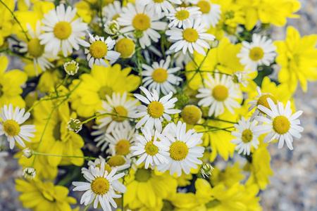 Common daisies and chrysanthemum flowers. Seasonal natural scene.