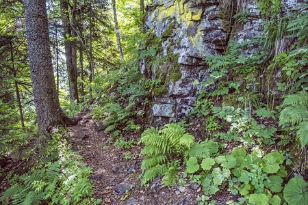 Rocks covered with rare moss and primeval forest, Hrb hill, Vepor mountains, Polana, Slovak republic. Seasonal natural scene. Travel destination.