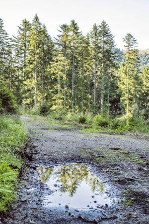 Footpath in coniferous forest, Low Tatras, Slovak republic. Seasonal natural scene. Travel destination.