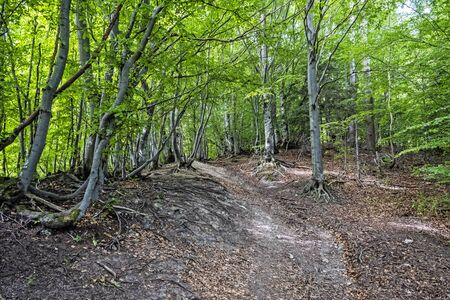 Hiking path in deciduous forest, Big Fatra mountains, Slovak republic. Seasonal natural scene. Travel destination. Forest scene.