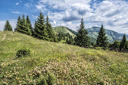 Big Fatra mountains, Slovak republic. Seasonal natural scene. Travel destination. Hiking theme. Meadow flowers. Stockfoto