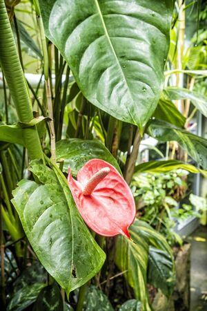 Botanical garden maintained by the University of Erlangen-Nuremberg, Erlangen, Franconia, Germany. Cultivation of plants.