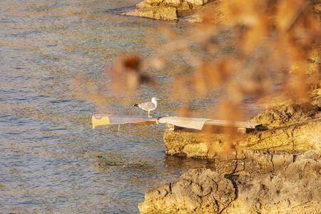 Seagull on the rocky beach, Stomorska, Solta, Croatia. Sunrise in Mediterranean Sea. Summer vacation. Natural scene. Stockfoto