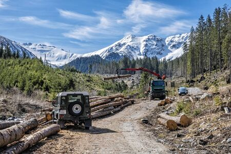 Calamity logging in Demanovska valley, National park Low Tatras mountains, Slovak republic. Deforestation theme. Seasonal natural scene. Stockfoto