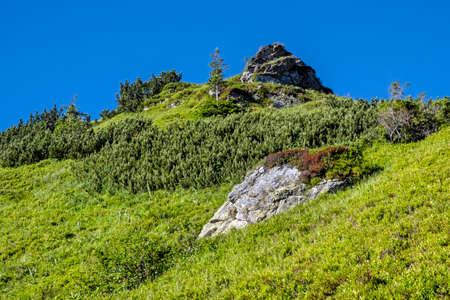 Meadow scene in Western Tatras scenery, Slovak republic. Hiking theme. Seasonal natural scene. 免版税图像