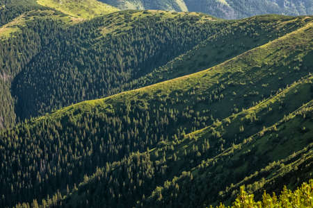 Sunrise in coniferous forest, Western Tatras mountains, Slovak republic. Hiking theme. Seasonal natural scene.