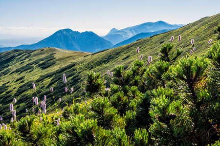 Western Tatras scenery from saddle Zabrat, Slovak republic. Hiking theme. Seasonal natural scene. 免版税图像