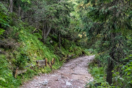 Footpath in coniferous forest, High Tatras mountains, Slovak republic. Hiking theme. Seasonal natural scene.