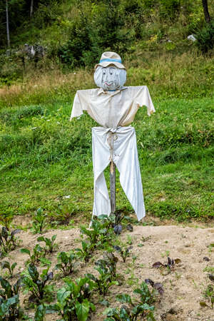 Smiling scarecrow in the vegetable garden. Rural scene.