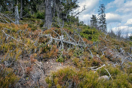 Dried trees, Big Fatra mountains, Slovak republic. Seasonal natural scene. Forest calamity theme.