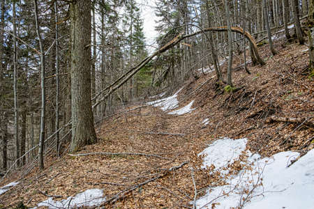 Footpath in deciduous forest, Big Fatra mountains, Slovak republic. Seasonal natural scene. Hiking theme.