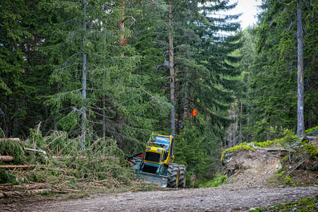 Tree logging in Ziar valley, National park Western Tatras, Slovak republic. Deforestation theme. Seasonal natural scene.