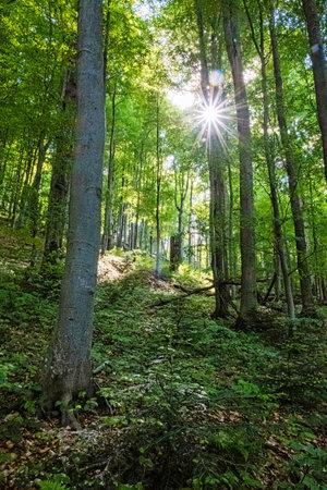 Sunrays in primeval forest Stuzica, National Park of Poloniny, Slovak republic. Seasonal natural scene.