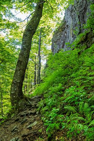 Sninsky Kamen hill, Vihorlat mountains, East Slovak republic. Seasonal natural scene.