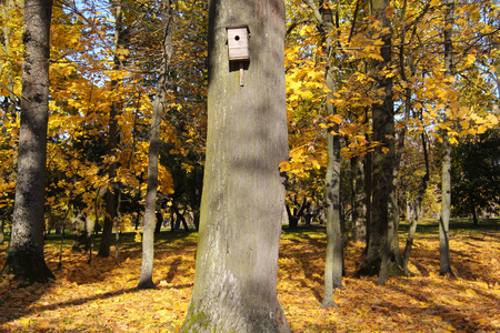 Birdhouse in a tree in autumn park with yellow leafs Stock Photo