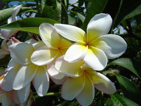 yeloow: flowers