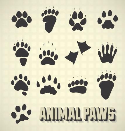 raton laveur: R�glez Paw Prints la faune sauvage et domestique
