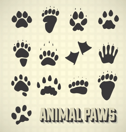 dog track: Set  Paw Prints of Wild and Domestic Animals