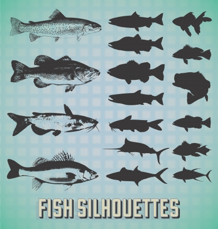 rainbow trout: Set: Fish Silhouettes Illustration