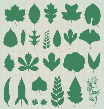 helechos: Siluetas de hojas