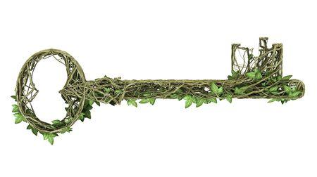 Ivy nature key