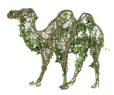 ivy nature camel  Stock Photo
