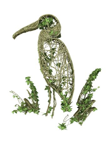 ivy nature bird