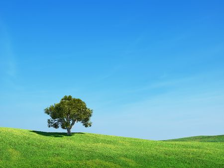 Green field and tree Stock Photo - 6512951