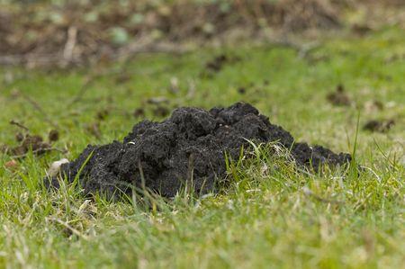 burrows: Molehill Stock Photo