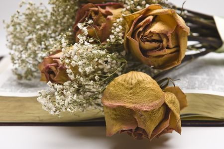 Dried pink roses with Baby Breath flowers laying on an opened book.