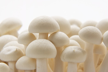 Close up of a bunch of white Enoki mushrooms against a white background.