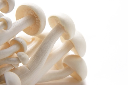 Close up of a bunch of white Enoki mushrooms against a white background. Stock Photo