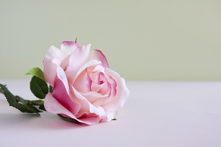 A single pink rose laying on a table. Stok Fotoğraf