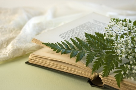 A single fern leaf lays on an opened vintage book with a green fern leaf and baby breath flowers with a lacy negligee in the background.