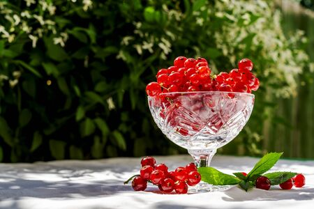 Fresh red currant in a crystal glass stand on a table with a white cloth on the background of blurred flowers. Fresh harvest of this year. Concept of healthy food, vitamin C. Copy space for your text Stockfoto