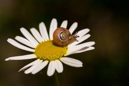 Snail on the wild flower. Macro photography of nature.