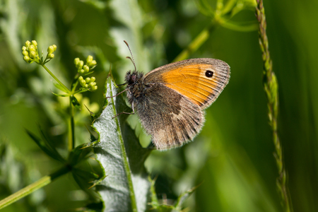 Butterfly on the leaf. Macro photography of wildlife.