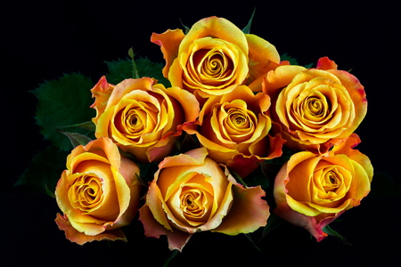 rosas naranjas: Close-up of bouquet orange roses. Photography of nature.