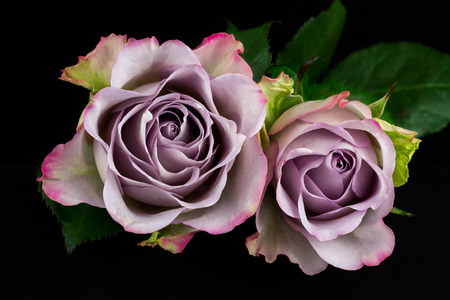 Close-up of bouquet pastel rose. Photography of nature.