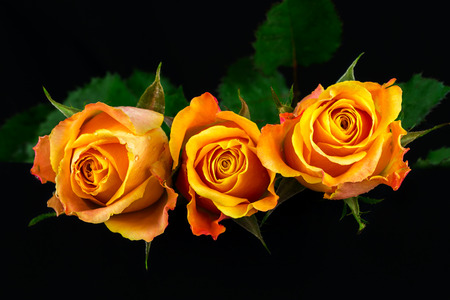 Close-up of bouquet orange roses. Photography of nature.