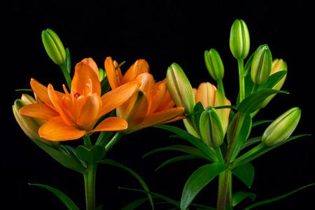 Close-up von Bouquet orange Lilien. Fotografie der Natur.