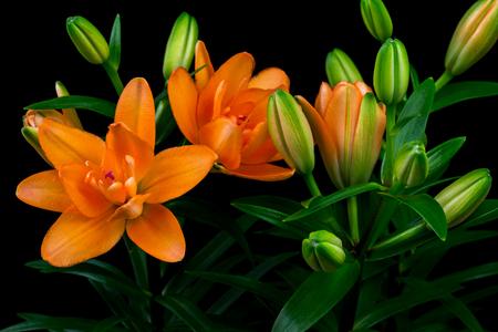 Close-up of bouquet orange lilies. Photography of nature. Standard-Bild