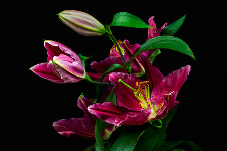 Close-up of pink lily flowers. Zen in the art of flowers. Macro photography of nature. Standard-Bild