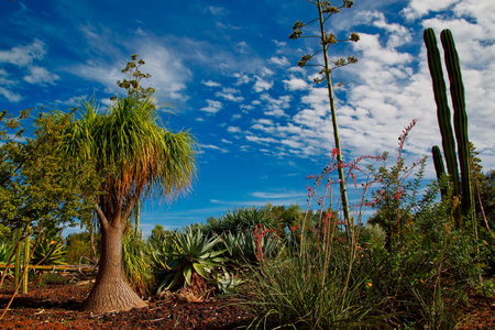 View of tropical landscape with trees and plants on the blue sky background. Macro photography of nature. Imagens