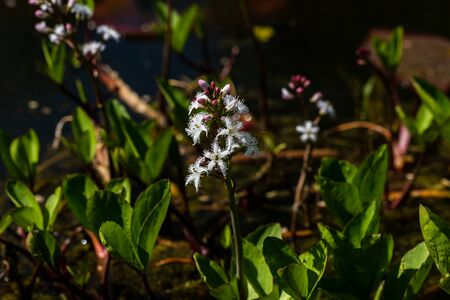 View of swamp and pond flowers and plants in the spring time. Macro photography of nature.