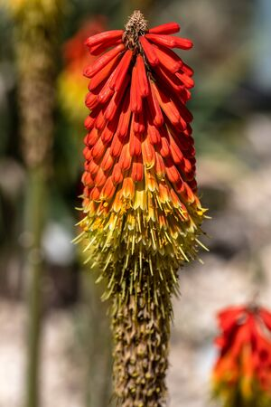 Close-up of tropical orange flowering wild plant. Photography of lively nature.