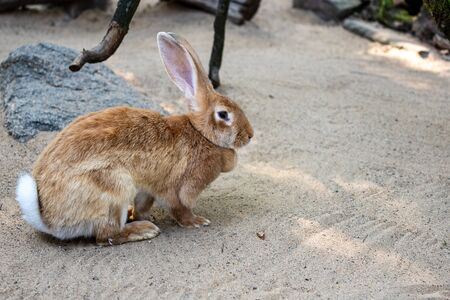 Full body of female brown European hare. Photography of nature and wildlife. Standard-Bild