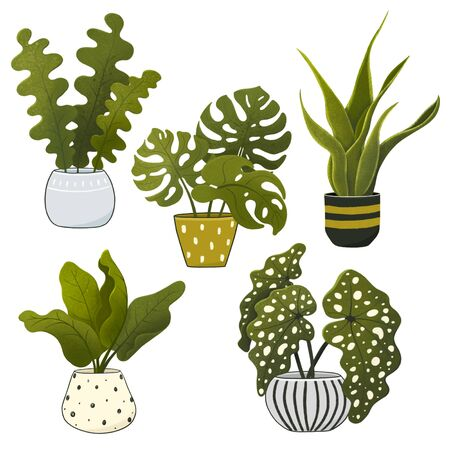 Set of decorative green house plants. Tropical plants in pots isolated on white background