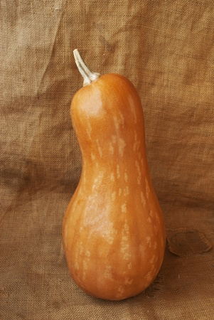 elongated orange gourd on a burlap sack photo